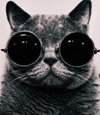 cat_avatar