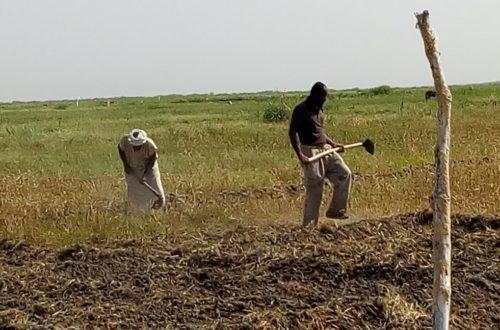Article : L'esclavage agricole aux bords du Lac R'Kiz, en Mauritanie