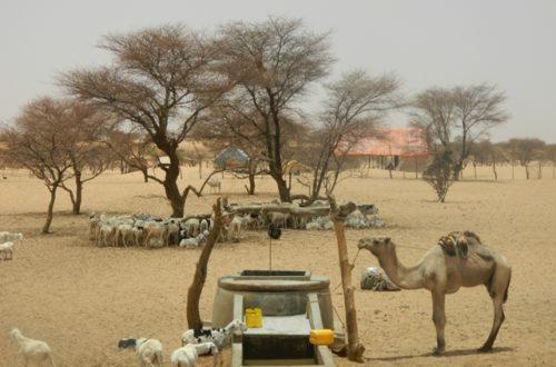 Article : ROSA et SUN-Mauritanie inquiets face à la situation sylvo-agro-pastorale et nutritionnelle en Mauritanie