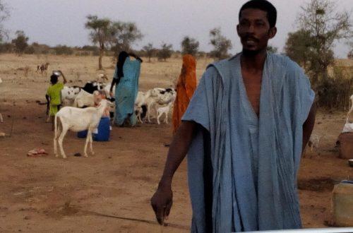 Article : Aliments de bétail et pâturage : cheptel et éleveurs menacés par une longue soudure