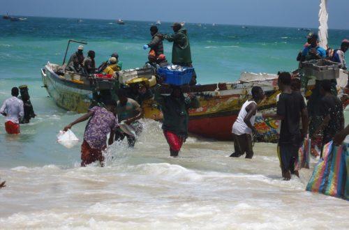 Article : Chaîne de valeur de la sardinelle : comment aller au-delà des milliers d'emplois créés en Mauritanie