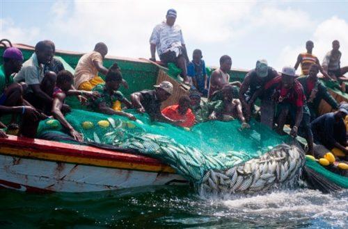 Article : Accords de pêche Mauritanie-Sénégal : poissons contre opposants