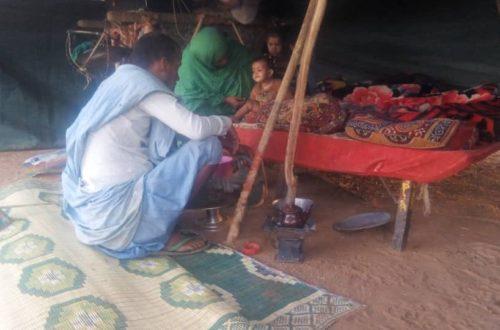 Article : Les pasteurs nomades, les ultimes gardiens de l'élevage mauritanien menacés de disparition