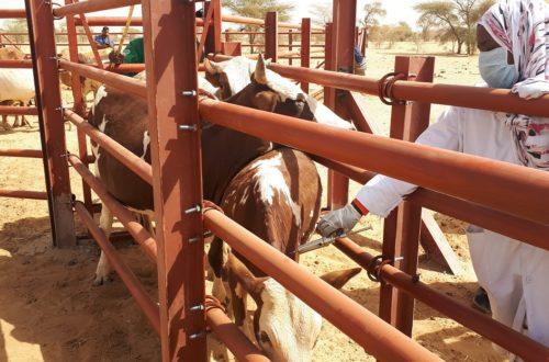 Article : Projet régional d'appui au pastoralisme au Sahel (PRAPS), une bouffée d'oxygène pour le monde rural en Mauritanie