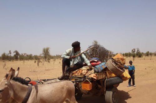 Article : Covid-19, les éleveurs du Guidimagha soutenus par plusieurs ONGS lancent un SOS de désespoir