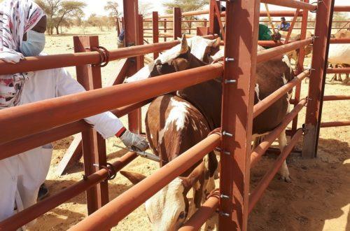 Article : Plan de Réponse Pastoral en Mauritanie, un faux départ dans la Mise en Œuvre